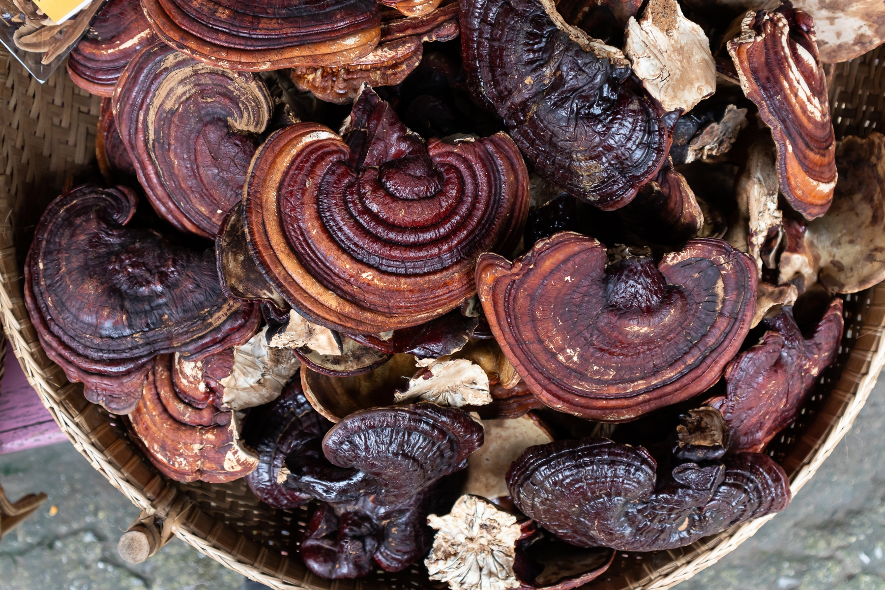 dried-lingzhi-mushroom-before-make-a-drug